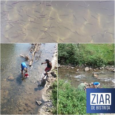 S-a băgat PEȘTE pe apele de MUNTE! Pescarii  AJVPS au repopulat cu puiet de păstrăv! De mâine (15 septembrie) începe prohibiția la păstrăv!