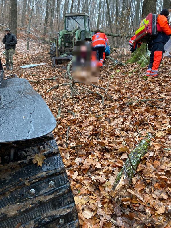Un bărbat și-a pierdut viața după ce a fost lovit de un copac (FOTO)
