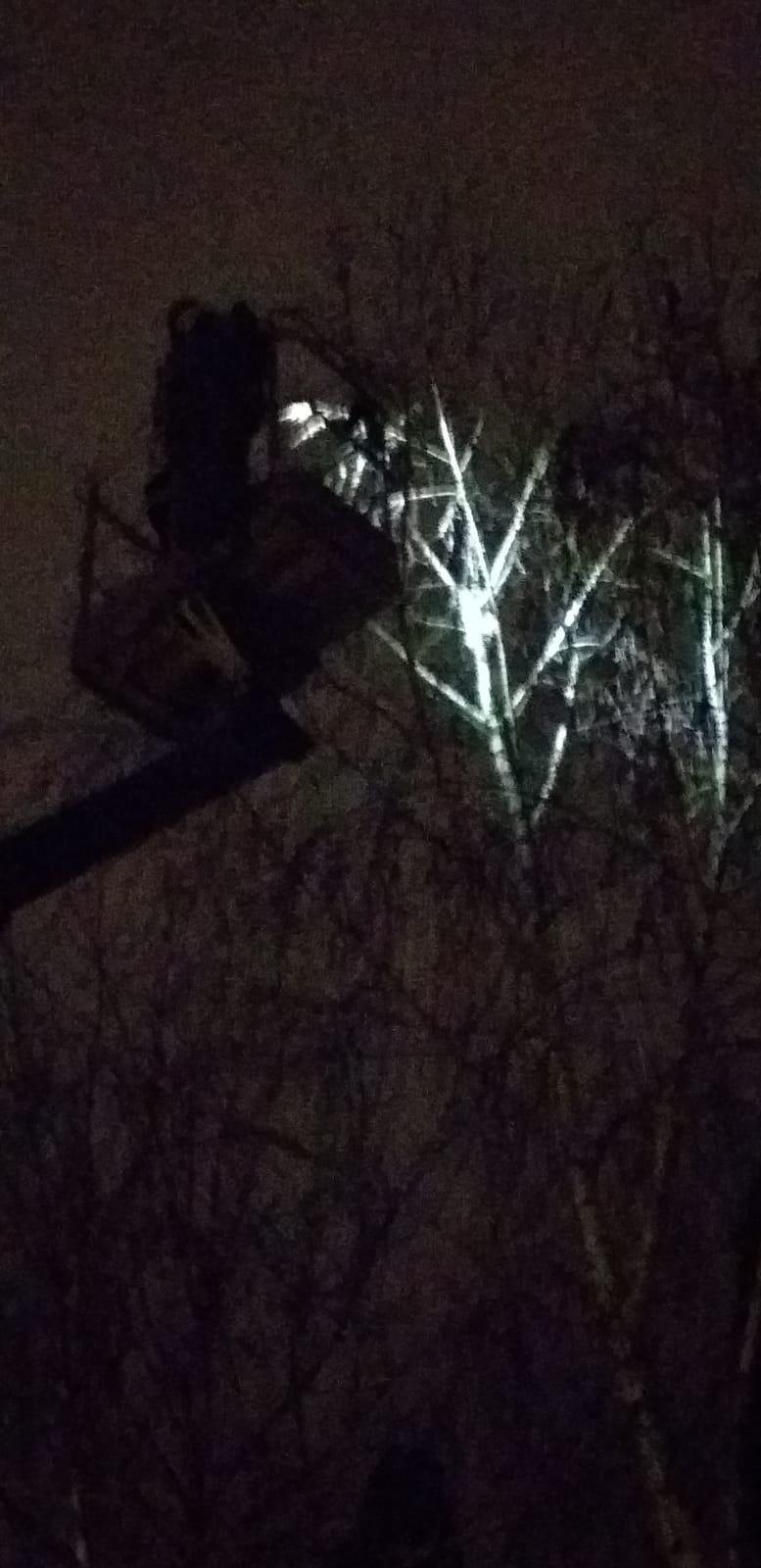 S-a urcat într-un copac și i-a fost frică să coboare. SVSU a rezolvat problema