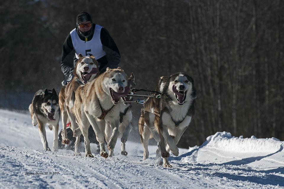 Competiția de atelaje canine, Drumul Romanilor 5.0, programată pentru luna februarie la Piatra Fântânele